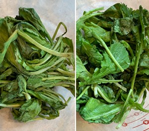 Radish greens before (left) and after a cool soak - MELISSA PASANEN