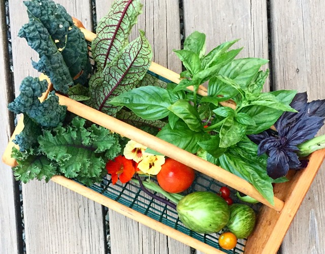Garden harvest - JORDAN BARRY