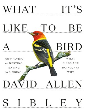 'What It's Like to Be a Bird: From Flying to Nesting, Eating to Singing — What Birds Are Doing, and Why'by David Allen Sibley