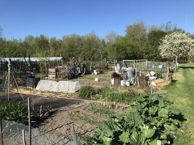 Tommy Thompson Community Garden in Burlington - SALLY POLLAK