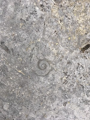 Fossil at Fisk Quarry - PAULA ROUTLY