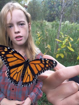 Pacem student Ripley Boyden tagging a monarch butterfly - COURTESY OF THETFORD ELEMENTARY SCHOOL