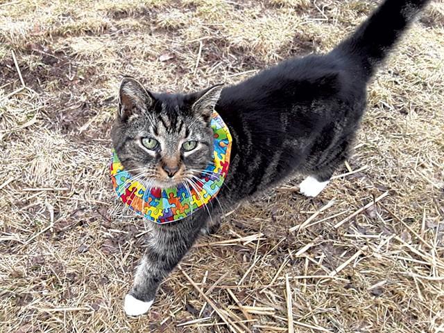 Bird-Safe Cat Collars