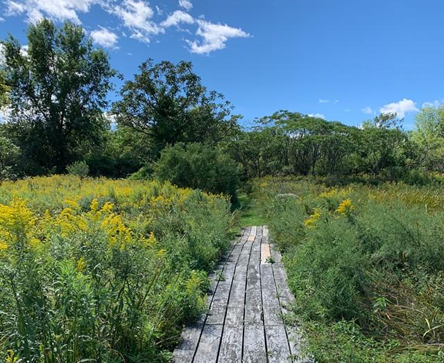 The Island Farm Nature Trail at Burton Island State Park - DAN BOLLES ©️ SEVEN DAYS