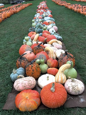 Whitcomb's Land of Pumpkins - COURTESY OF MARY WHITCOMB