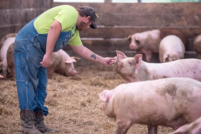 Pig farmer Ethan Gevry in Addison - CALEB KENNA