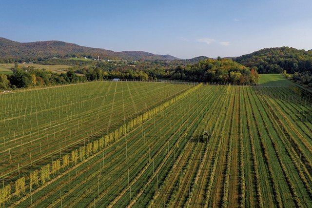Late-season hops harvest at Champlain Valley Hops - JAMES BUCK
