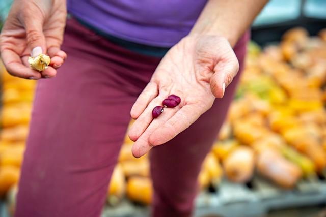 Livy Bulger showing off jewel-like cranberry beans - JORDAN BARRY ©️ SEVEN DAYS