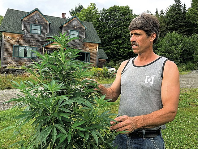 Sen. John Rodgers with a hemp plant - FILE: ALICIA FREESE ©️ SEVEN DAYS