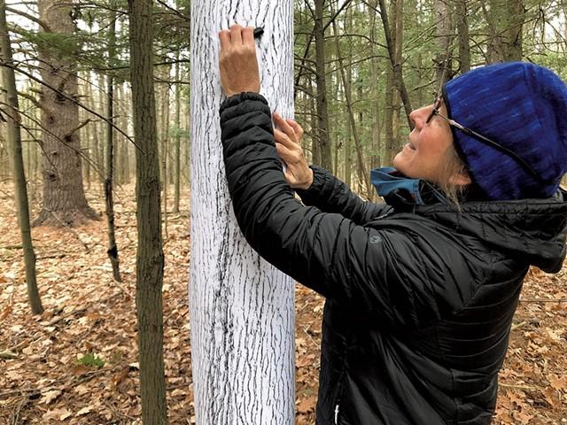 Elizabeth Billings doing a tree rubbing at the LaPlatte River Marsh Natural Area - COURTESY OF ELIZABETH BILLINGS