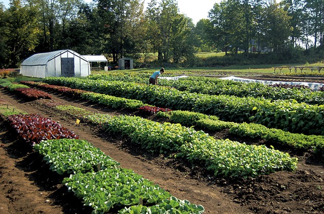 High Mowing Organic Seeds trial field