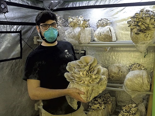 Kevin Melman with blue oyster mushrooms in the fruiting chamber - COURTESY OF KEVIN MELMAN