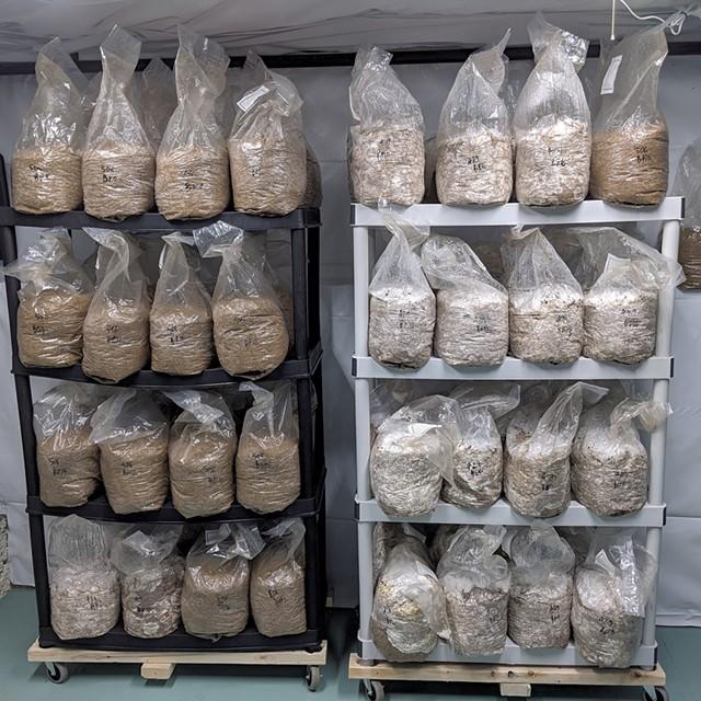 "Mushroom ""logs"" in the inoculation room - COURTESY OF KEVIN MELMAN"