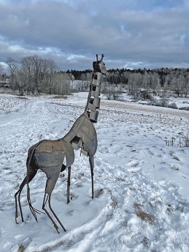 """Giraffe"" by Harlan Mack - COURTESY OF AMY LILLY"