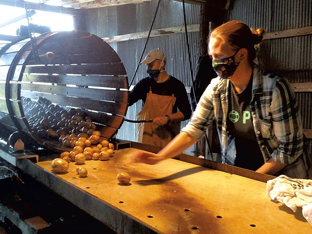 Farmer Mark Cannella (rear) and volunteer Rebecca Mead washing Valentine Farm potatoes in 2020 - COURTESY COMMUNITY HARVEST OF CENTRAL VERMONT