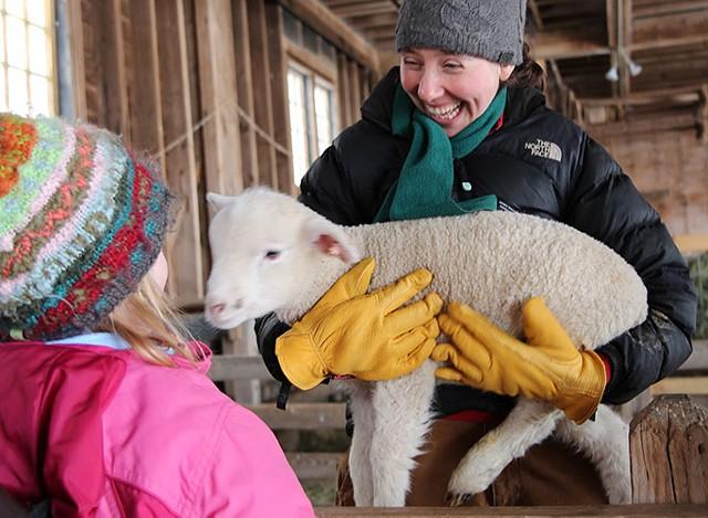 Sheep and Shear Delights - COURTESY OF VERA CHANG