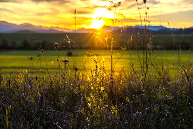 "Jeffrey Herwood, ""Flower Sunset"""