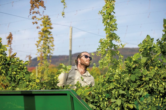 Hops harvesting at Champlain Valley Hops - FILE: JAMES BUCK