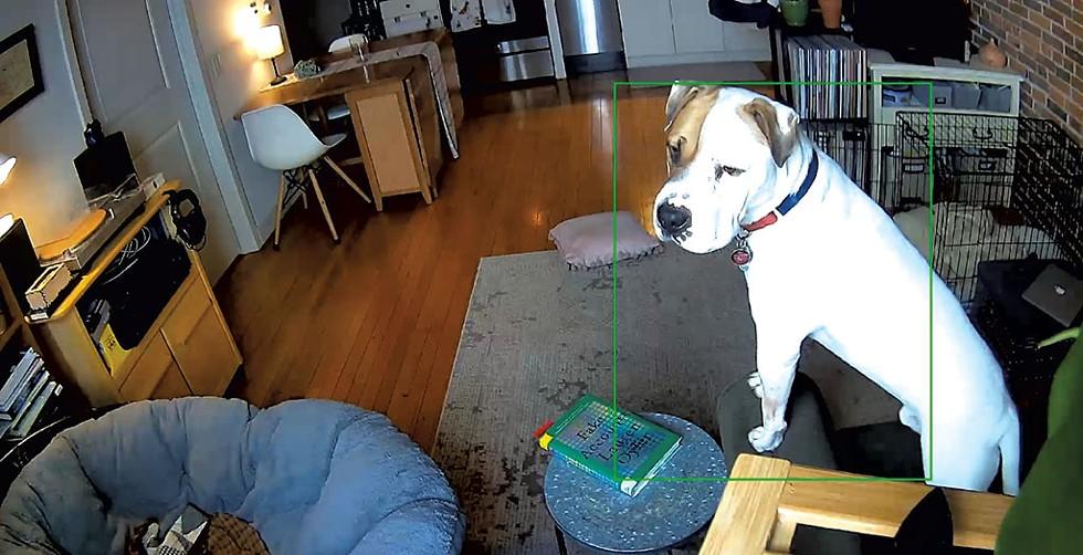 Walnut home alone, as seen through a dog nanny cam - MARGARET GRAYSON ©️ SEVEN DAYS