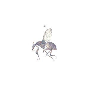 Black Fly, Black Fly 01 - COURTESY