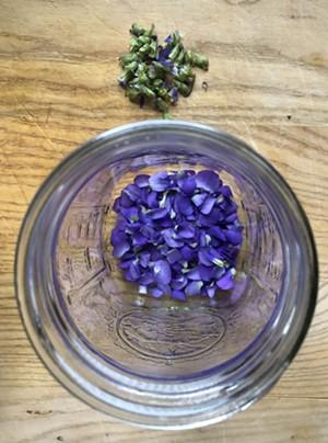 Separating violet petals from the calyxes - JORDAN BARRY ©️ SEVEN DAYS