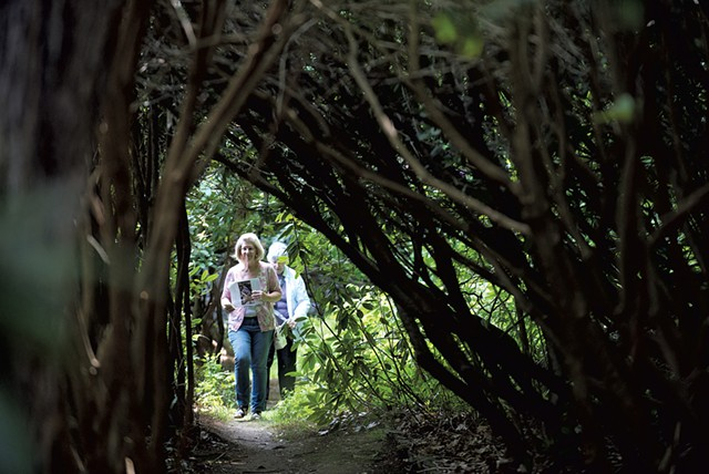 The rhododendron tunnel along a garden path - COURTESY OF KELLY FLETCHER PHOTOGRAPHY