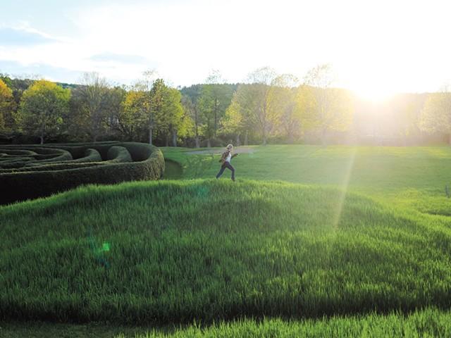 A hilltop overlooking the hemlock Adventure maze - SARAH PRIESTAP