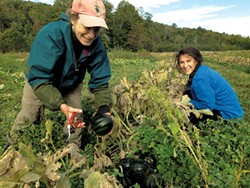 Nina Church and Karissa Smith gleaning at High Mowing Organic Seeds in Wolcott - COURTESY OF THERESA SNOW