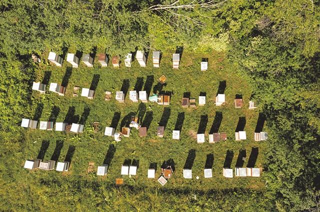 Champlain Valley Apiaries hives in Shoreham - CALEB KENNA