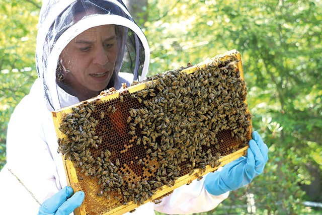 Brooke Decker inspecting a beehive - KEVIN MCCALLUM ©️ SEVEN DAYS
