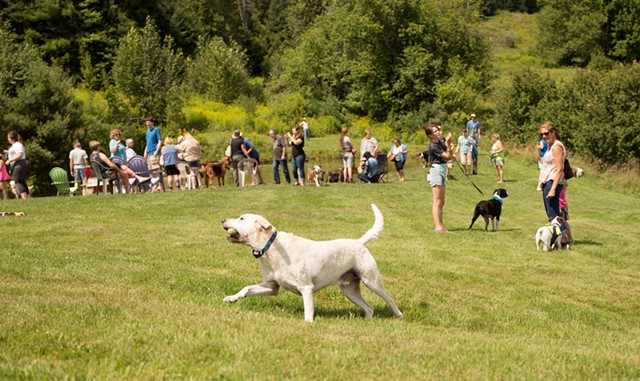 Dog Party - COURTESY OF ANGIE LOW