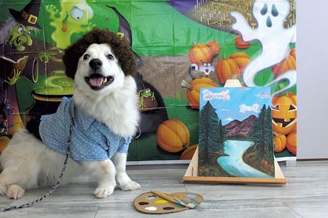 Henry (Human: Mara Puppy) - COURTESY