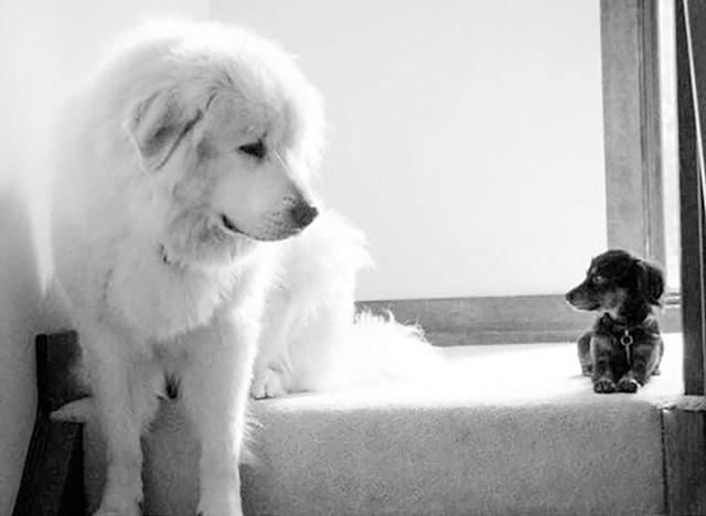 Robroy and Lucy (Human: Nancy Malhotra) - COURTESY