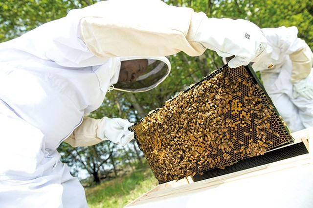 Francois Gasaba moves bees into their new home - JAMES BUCK