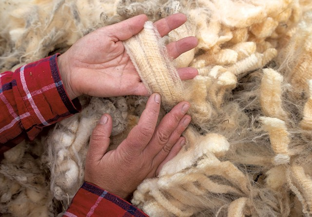 Katie Sullivan sorting raw fleece - JEB WALLACE-BRODEUR
