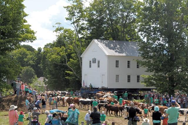 Oxen pulling the 1823 schoolhouse - JULIA SHIPLEY