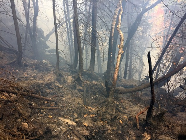 A forest fire in Bolton earlier this month - COURTESY: LARS LUND, DEPARTMENT OF FORESTS, PARKS AND RECREATION