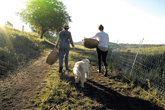 Red clover harvest at Free Verse Farm - COURTESY OF URBAN EXODUS