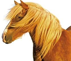 icelandic-horse-farm.jpg