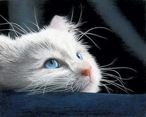 Blue-Eyed Kitten - PHOTOS: COURTESY OF CORRINA THURSTON
