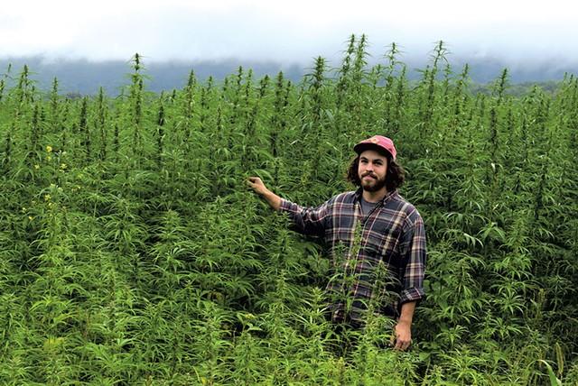 Rye Matthews of Vermont Hemp Co. at Quarry Road Farm's hemp field in Middlebury - TERRI HALLENBECK