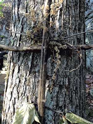 A makeshift cross fastened to a tree at the Lower West Bolton cliffs - MOLLY WALSH