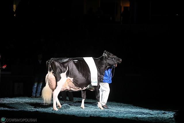 Blexy, Supreme Champion of the World Dairy Expo - COURTESY OF SHARYN ABBOTT