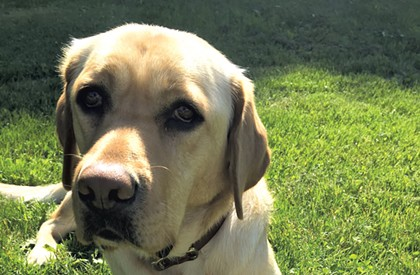 Isn't That Sweet: Newest Vermont State Police K-9 Is Named Maple
