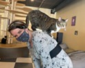 Stuck in Vermont: Kitty Korner Café in Barre Finds Furever Homes for Felines