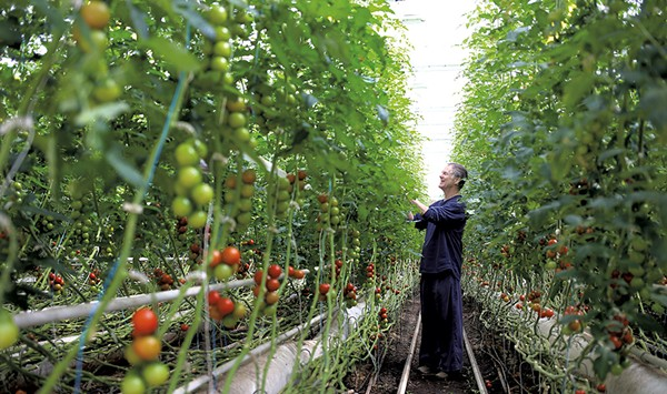 Vermont Tomato Farmer Leads Defense of Organic Principles