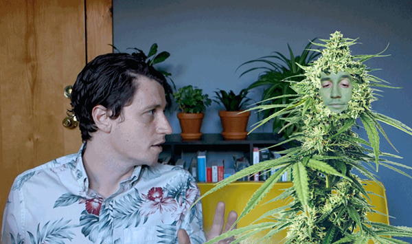 Seriously: Cannabis Issues