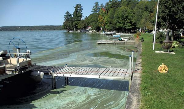 Toxic Algae Bloom in Private Vermont Pond Kills Dog, Puppy