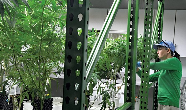 Vermont Grants Medical Marijuana License to PhytoScience Institute