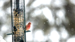 How to Make Your Backyard an Avian Attraction